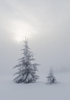 Paisagem de inverno com pinheiros cobertos de neve e nevoeiro