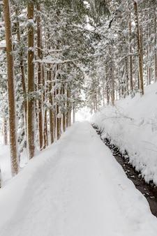 Paisagem de inverno da floresta de pinheiros