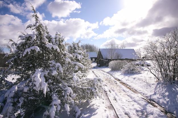 Paisagem de inverno. edifício de casa rural atrás dos ramos da planta de zimbro na neve fresca.