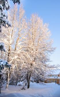 Paisagem de inverno em um dia ensolarado