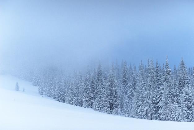 Paisagem de inverno fantástico. na véspera do feriado. a cena dramática. cárpatos, ucrânia, europa. feliz ano novo