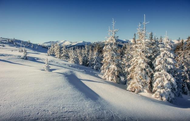 Paisagem de inverno fantástico nas montanhas da ucrânia. em antic