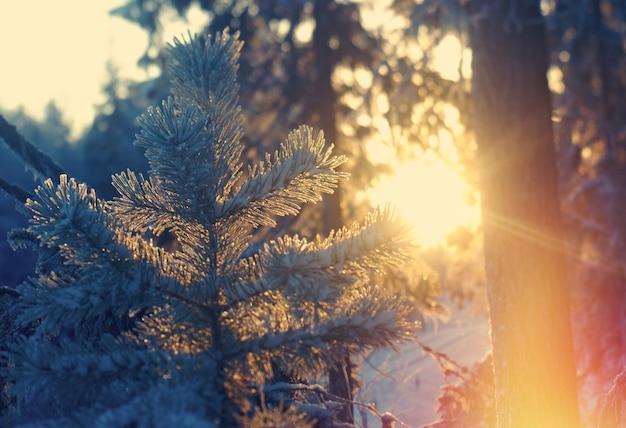 Paisagem de inverno. floresta congelada de taiga
