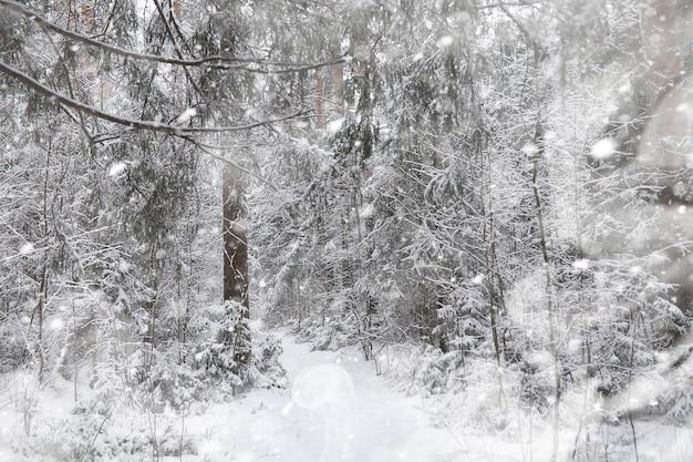 Paisagem de inverno. floresta sob a neve. inverno no parque.
