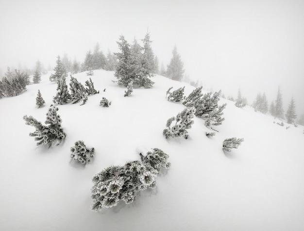 Paisagem de inverno majestosa com árvores na neve