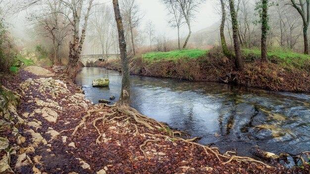 Paisagem de inverno na floresta com rio, árvores sem folhas e nevoeiro intenso no ambiente. duraton, sepúlveda, segóvia. espanha.