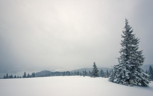 Paisagem de inverno rigorosa, belos pinheiros nevados se destacam contra uma área montanhosa nebulosa em um dia frio de inverno