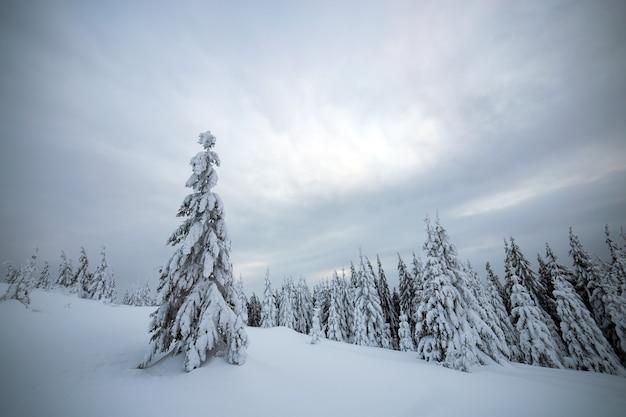 Paisagem de inverno temperamental com alta floresta de abetos encolhidos de neve branca em montanhas congeladas.