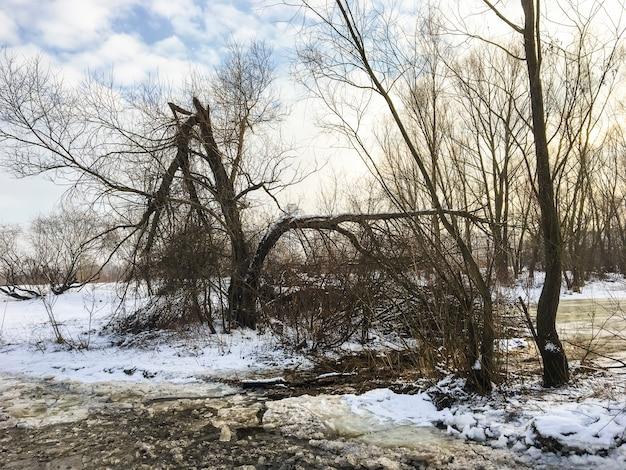 Paisagem de inverno: um riacho coberto de gelo, árvores secas e arbustos na costa