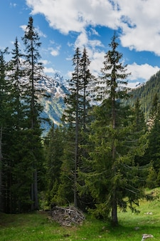 Paisagem de montanha alpes de verão com floresta de abetos em encosta e topos rochosos cobertos de neve em longe, na áustria.