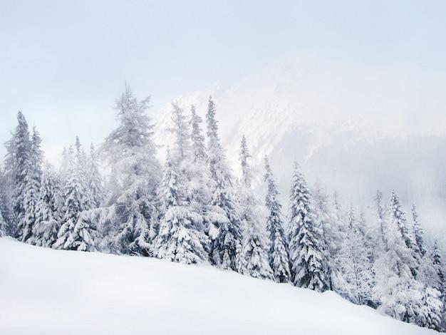 Paisagem de montanha de inverno e abeto coberto de neve