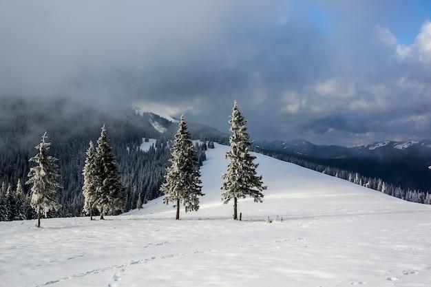 Paisagem de montanha do inverno com pinheiros cobertos de neve