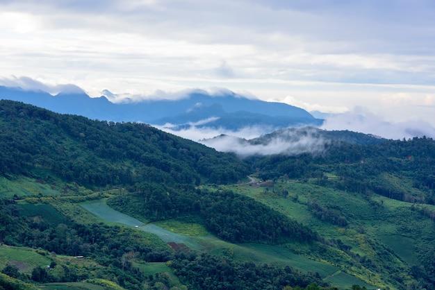 Paisagem de montanha e floresta na tailândia.