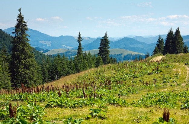 Paisagem de montanha enevoada de verão com estrada secundária, cárpatos, ucrânia
