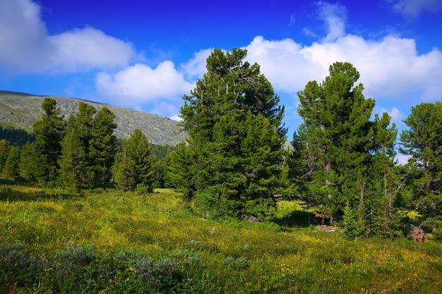 Paisagem de montanhas com floresta de cedro