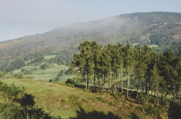 Paisagem de montanhas e árvores.