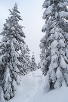 Paisagem de natal com neve. caminho na floresta de inverno