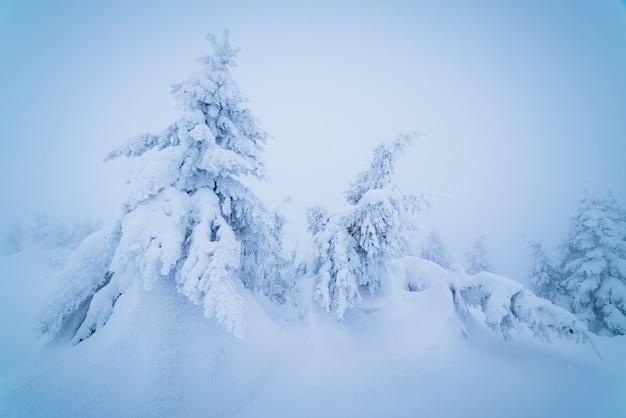 Paisagem de natal de conto de fadas. árvores cobertas de neve em uma floresta de montanha. tonificação de cor