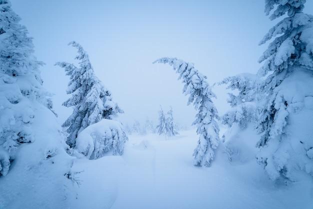 Paisagem de natal de conto de fadas. inverno na floresta montanhosa. beleza na natureza. tonificação de cor