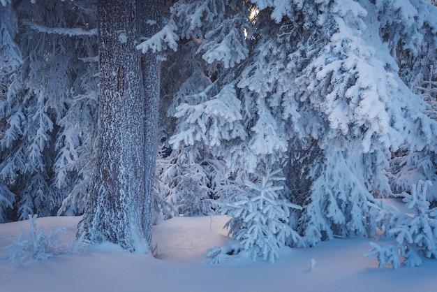 Paisagem de natal em uma fabulosa floresta de inverno