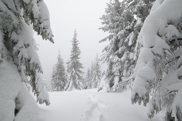 Paisagem de natal. trilha na neve em uma floresta de montanha. dia nublado. cárpatos, ucrânia, europa