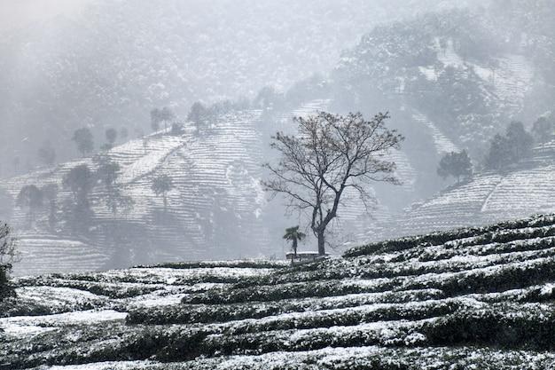 Paisagem de neve com névoa