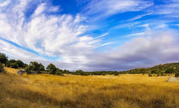 Paisagem de nuvens e céu azul sobre o campo de ervas douradas.