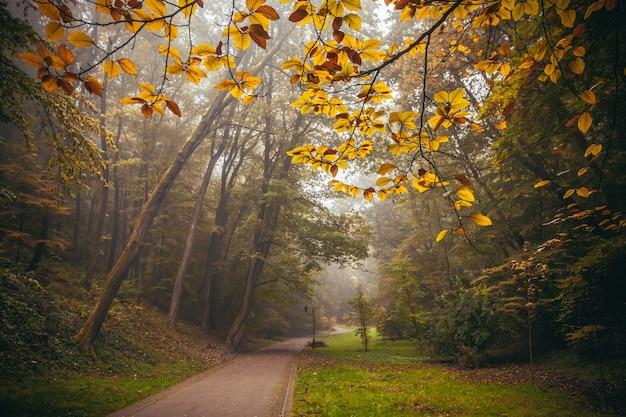 Paisagem de outono, árvores amarelas na névoa da manhã