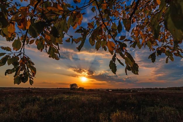 Paisagem de outono através dos galhos de uma árvore no campo com um pôr do sol