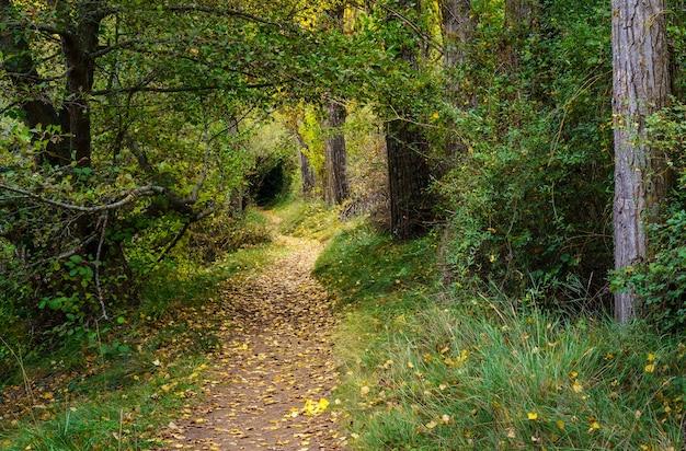 Paisagem de outono. caminho na floresta com luzes e sombras. tapete de folhas caídas e floresta mágica e encantada. segóvia, espanha.