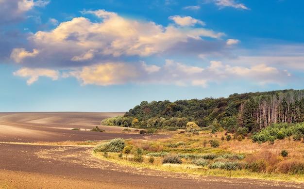 Paisagem de outono: campo arado perto da floresta, céu pitoresco com nuvens encaracoladas