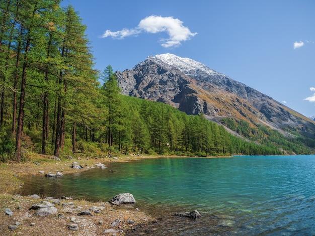 Paisagem de outono colorida com lago de montanha clara na floresta entre os abetos no sol. cenário brilhante com belo lago turquesa no contexto das montanhas cobertas de neve.