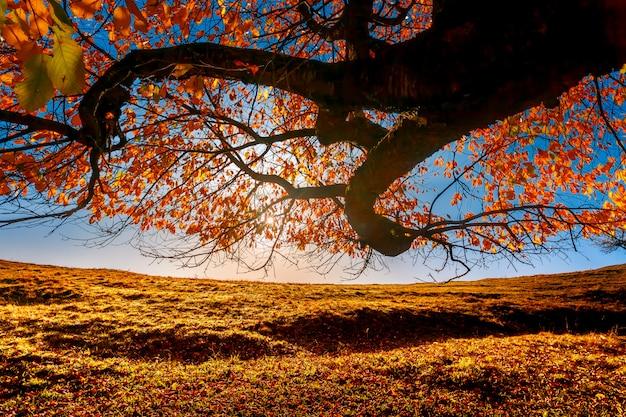 Paisagem de outono colorida