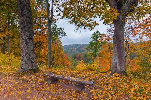 Paisagem de outono com árvores coloridas, lituânia