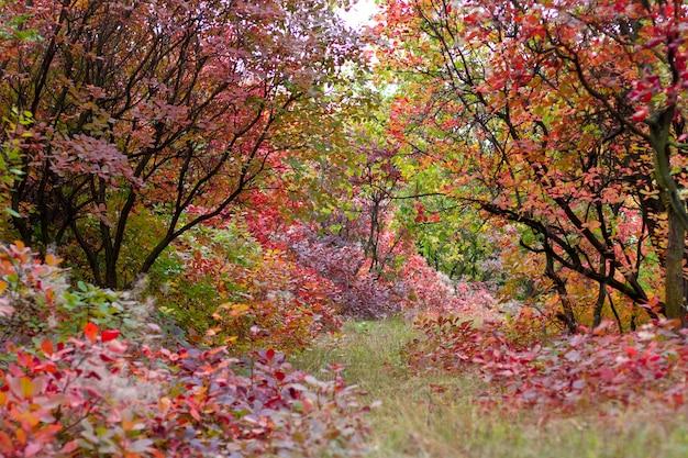 Paisagem de outono com belas árvores coloridas