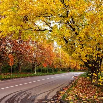 Paisagem de outono com estrada e folhas amarelas e vermelhas
