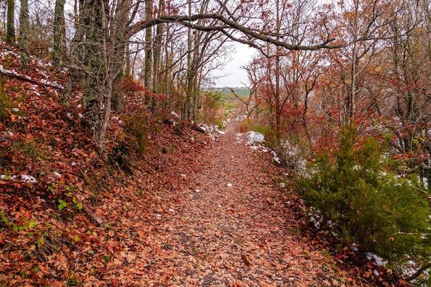 Paisagem de outono com neve, caminho de folhas caídas de árvores e montanhas nevadas. parque tejera negra.