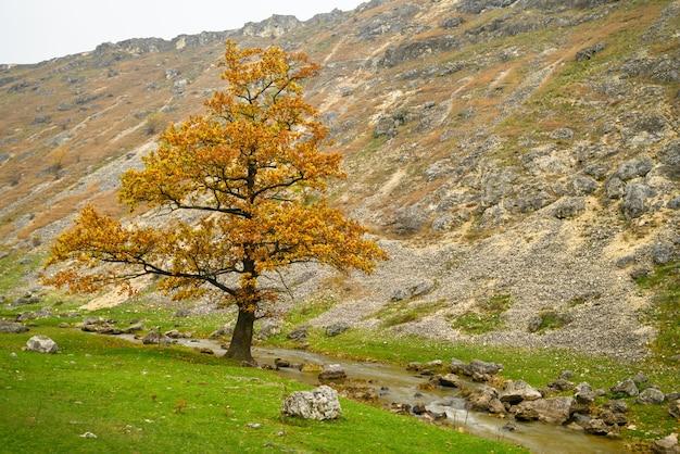 Paisagem de outono com uma única árvore nas colinas