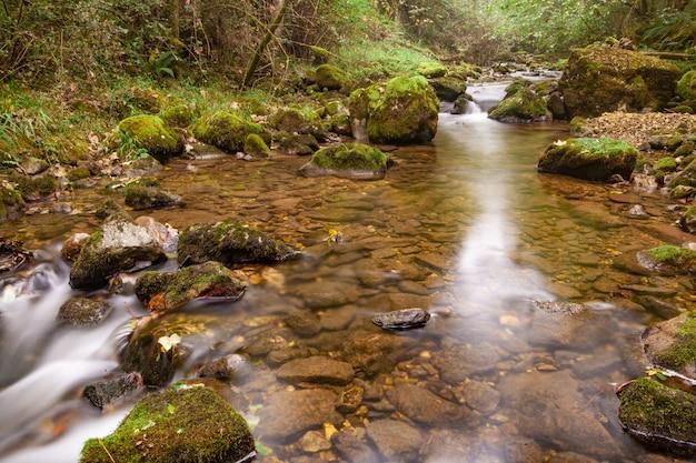 Paisagem de outono de um rio de montanha enevoada fluindo pela floresta verde