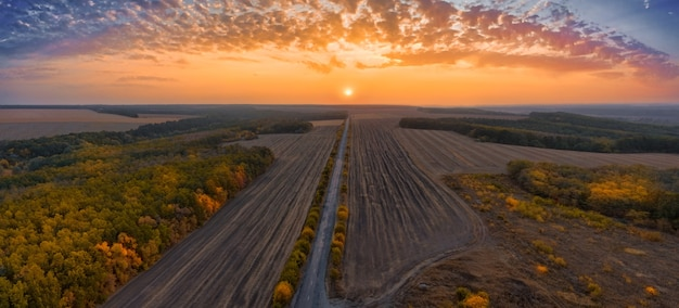 Paisagem de outono: estrada à frente entre as árvores com folhagem amarelada - vista aérea ao pôr do sol