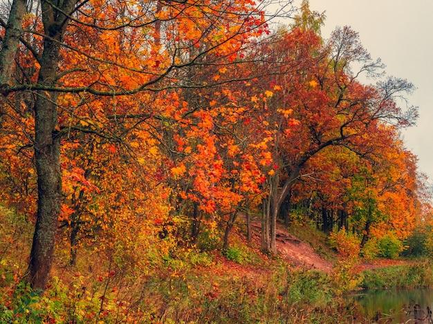 Paisagem de outono matinal com árvores vermelhas