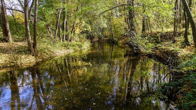 Paisagem de outono na floresta com árvores douradas, amarelas e verdes e folhas caídas no chão. rio duraton.
