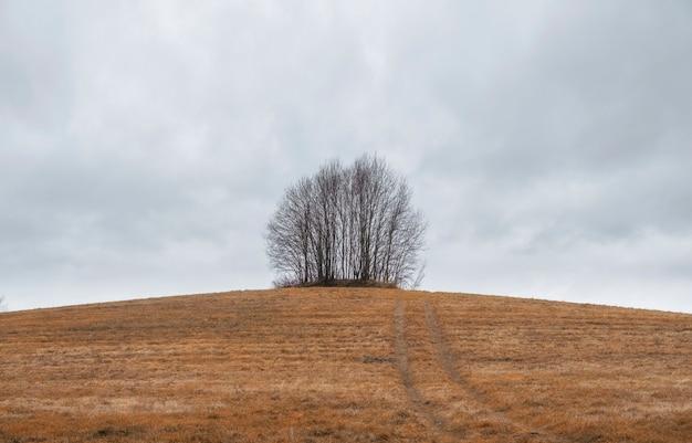 Paisagem de outono no estilo minimalista, um grupo de árvores em uma colina em um campo amarelo ceifado
