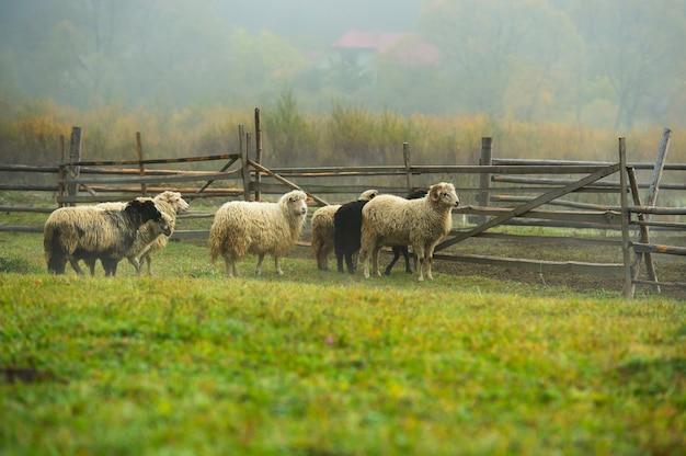Paisagem de outono nos cárpatos ucranianos ocidentais