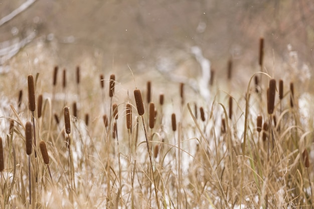Paisagem de outono ou inverno com flores secas e grama.