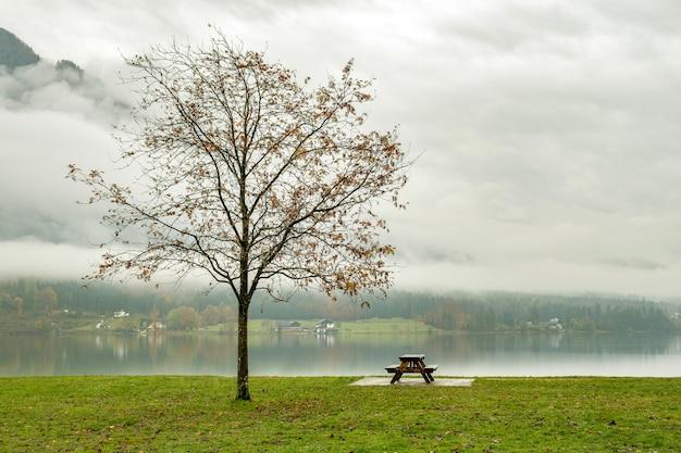 Paisagem de outono temperamental com árvore nua e banco solitário na margem do lago de montanha.