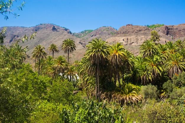 Paisagem de palmeiras no meio da natureza gran canaria island férias rurais