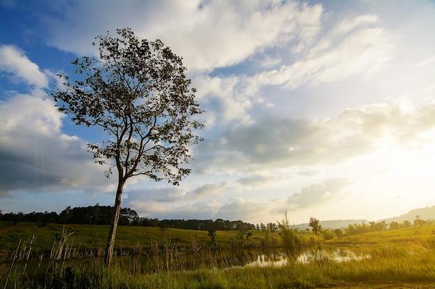 Paisagem de pastagens e árvores no parque nacional thung salaeng luang, província de phetchabun, tailândia