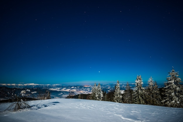 Paisagem de pinheiros altos e delgados cobertos de neve crescendo em uma colina