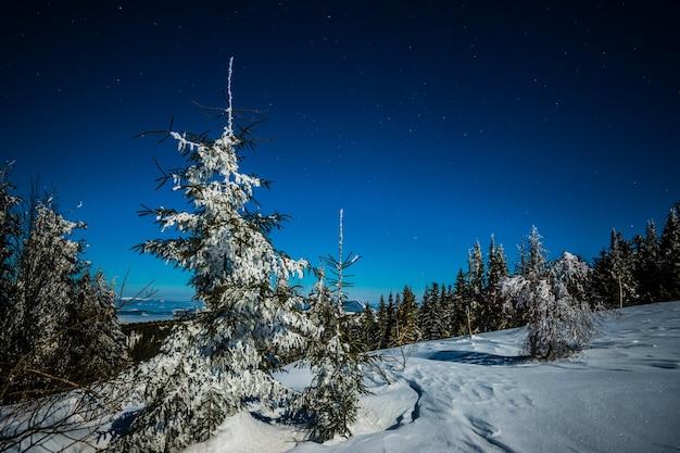Paisagem de pinheiros altos nevados entre montes de neve nas colinas
